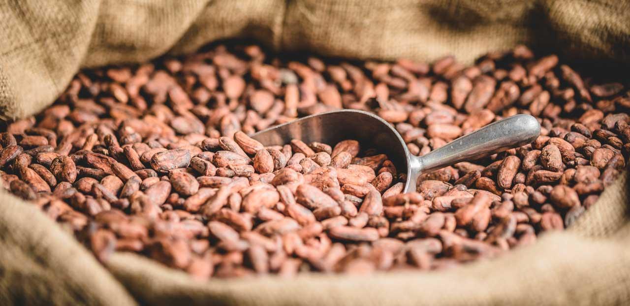 cacao-bulk